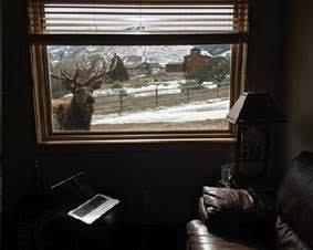 Elk through cabin window